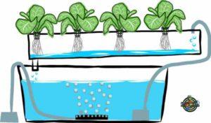 Cultivos hidroponicos Marte