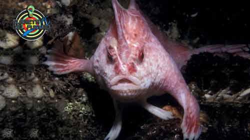 pez rosado del futuro