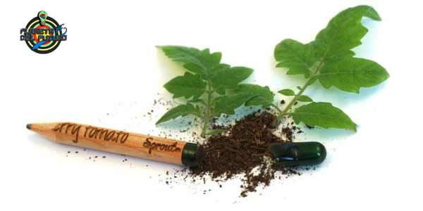 lápices ecológicos con semillas