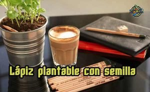 Lápiz plantable con semilla Sprout