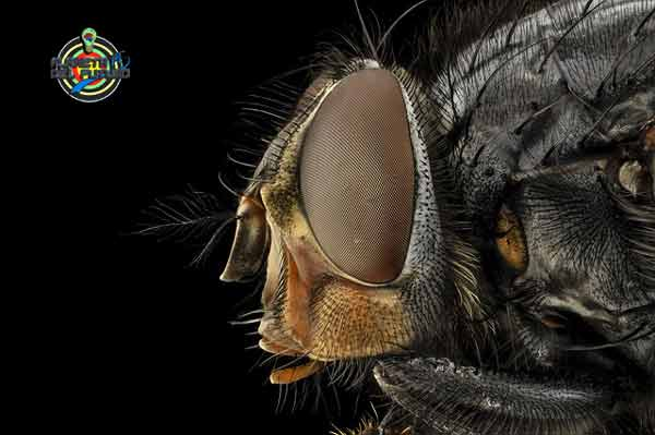 las moscas muerden o pican
