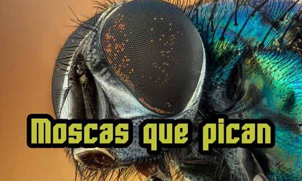 ¿Te puede picar una mosca?