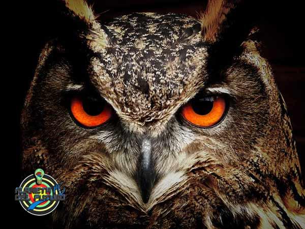 que animales tienen mas desarrollado el sentido de la vista