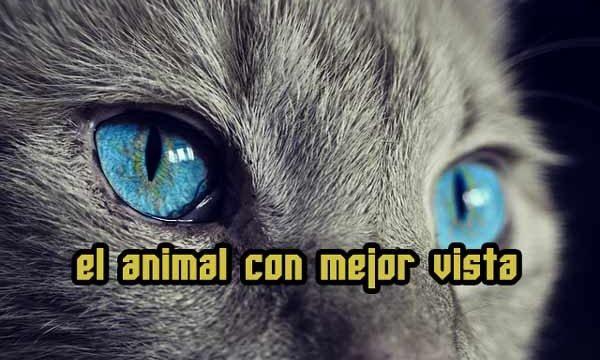 ¿Qué animales tienen la mejor vista?