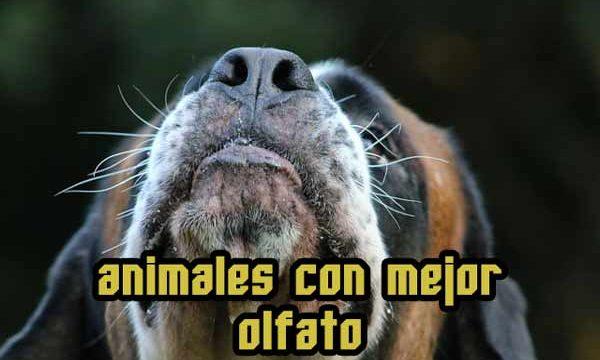 ¿Cuáles son los animales con mejor olfato?