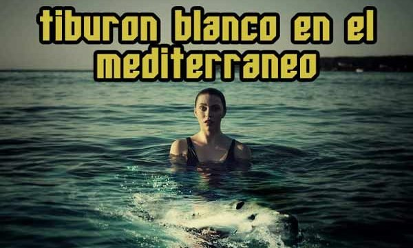 tiburón blanco mediterráneo