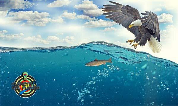 donde estudiar oceanografia
